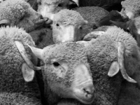 nature des choses (01)
