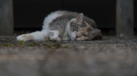 Still1_TheLastChapter